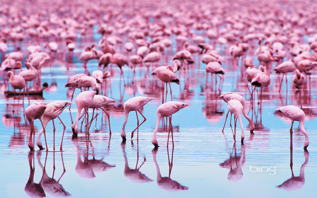 Flamingos (by nguyenducbinbin)