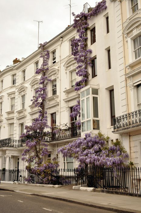 Wisteria grows on a building in London, England (via Exterior Envy /(imagem JPEG, 465×700 pixels))