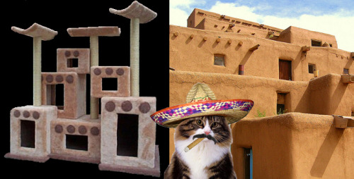 El Gato Con Carne shows off his vacation cat fort modeled after the Adobe settlements of Catalajara, Mexico.