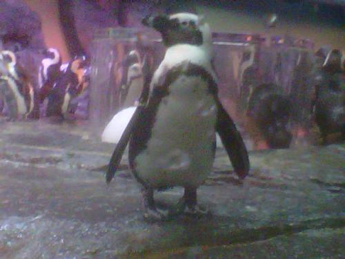 Penguins are so cute :3