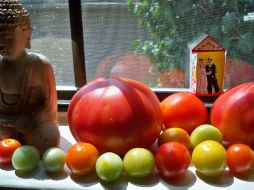 Buddha tomato wedding