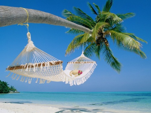 A restful hammock hangs from a palm tree in the Maldives (via World Travel)