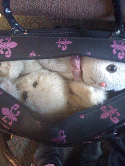 Morvis and Prudence, snuggled in the carry-on and ready for the PDX trip!