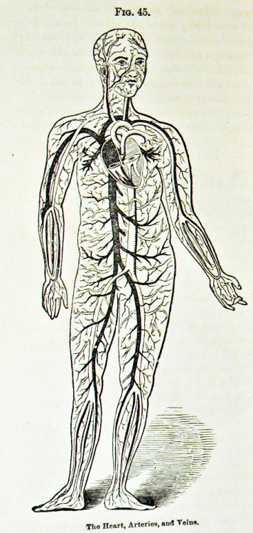 1880's health book anatomy