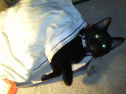 My cat Jubilee I miss her :( p.s. Those hideous underwear arent mine lol