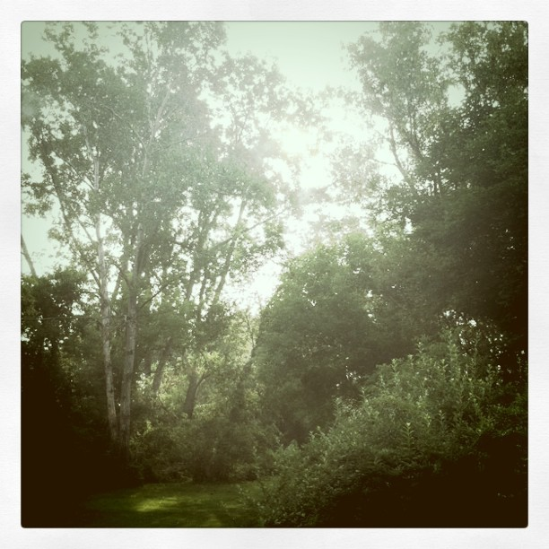 #sunshine and #trees (Taken with Instagram at Italian American Club)