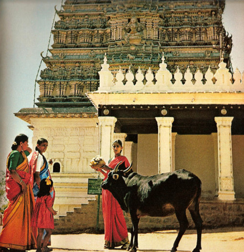 Women with cow in front of an Indian temple Photo by  Michael Wolgensinger in Der Mensch mit den Tieren, 1965