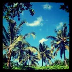 #love for #palmtrees in #bali #indonesi #iphonesia #asia #travel #tropical  (Taken with instagram)