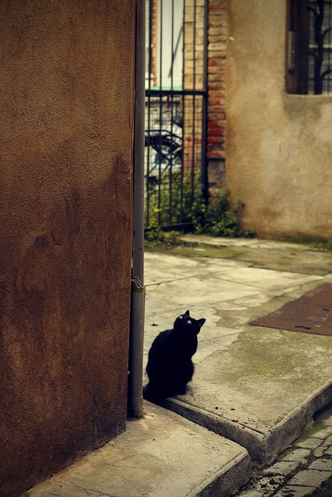 Black cat in Toulouse.