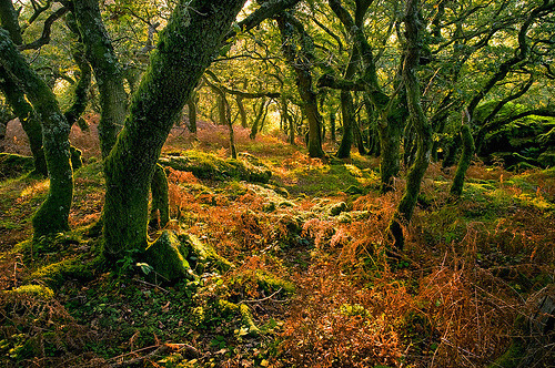 Enchanted forest in Dartmoor, Devon, England (by snaps11)