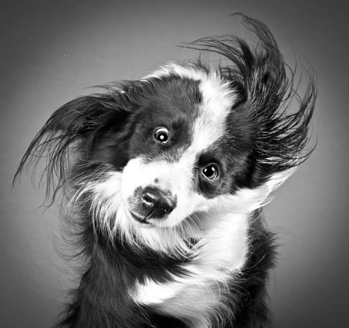 Dogs In Motion Caught by Pet Photographer Carli Davidson.