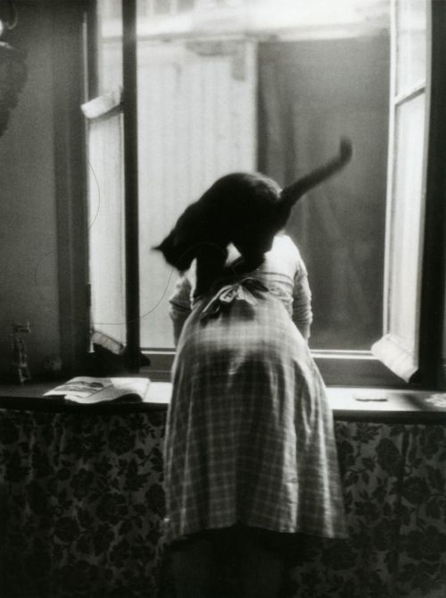 lauramcphee:  from Les chats de Willy Ronis, Paris, 1954 (Willy Ronis) via liquidnight