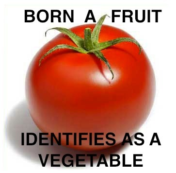 "lgbtlaughs:  [Image description: a photo of a tomato. Caption reads: ""Born a fruit. Identifies as a vegetable""] (Submitted by Nicolas)  *spit-take* Utterly awesome."