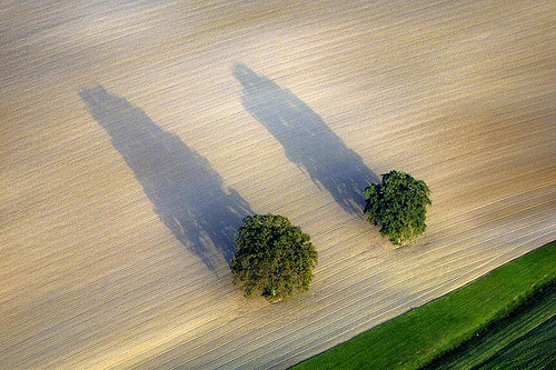 Surmounting shadow  Two trees in a field (by Aerial Photography)  via black-wolves
