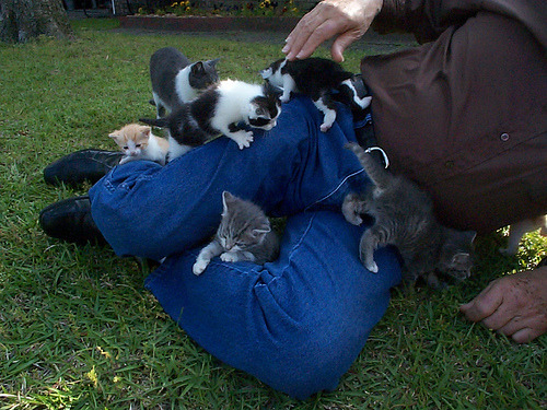 Kitten attack. Photo by Clevergrrl