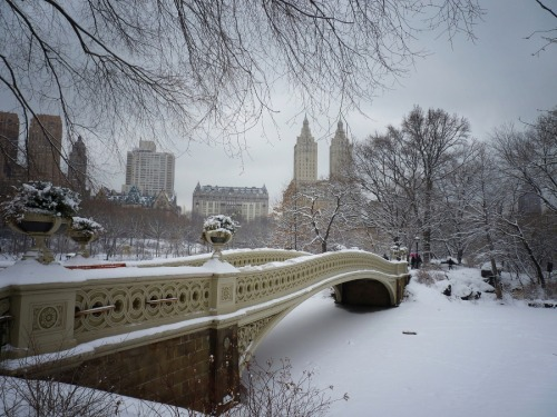 "Bow bridge in the winter covered in snow. Central Park, New York City  It's another super hot day in New York City today. The temperature is currently something like 101 degrees (fahrenheit) with heat index values climbing up to around 115 in certain places. I have decided that the only way to cope is to look at photos of New York City in the dead of winter like this one.  This particular image was taken back in January during a blizzard. New York City got something like 19 inches of snow and this was only weeks after the first blizzard of the season which practically shut the city down.   Central Park in the midst of heavy snowfall is absolutely magical. Because of the heavy wind gusts and storm conditions, the only people in the park were either very adventurous tourists trying to make the best of their vacation and other crazy photographers reveling in the beauty of Central Park's landscapes covered in ice and snow. I spent around 4 hours there in total and only came across less than 10 people in total. The people I did come across were very friendly and in awe of the environment.   This is one of Central Park's most popular bridges, Bow Bridge. It's one of my favorite spots in the park. It's usually packed with people enjoying the views from on the bridge itself.  Under Bow Bridge sits The Lake which spans 22 acres and is Central Park's largest body of water.  ""Bow Bridge, shaped like an archer's bow, was built between 1859 and 1862. It connects the Ramble and Cherry Hill, and spans more than 60 feet of the Lake. Because the south bank was higher than the north, construction of the cast iron bridge included raising the height of its northern abutment. Janes, Kirkland, and Co., the firm responsible for the dome of The Capitol in Washington, D.C., did the ironwork for the span of Bow Bridge. Vaux and Mould created the ornamental iron railing that incorporates elements of Gothic, Neo-Classical, and Renaissance design."" Source  —-  View this photo larger and on black on my Google Plus page  —-  In other news, a photo of mine from the most recent Manahttanhenge was used as the first photo for this photo-spread on My Modern Met here: The Manhattanhenge Phenomenon  Additionally, I won some swag from Gansevoort Hotel due to being one of two winners of a contest they ran called Gansevoorthenge where they asked for Manhattanhenge photo submissions via Twitter. You can see an embarrassing photo of me taken a few days ago in the midst of this heatwave (I hate all photos of myself!) with the winning swag here: Our #Gansevoorthenge Photo Contest Winners!  —-  Buy ""Bow Bridge in Winter"" Posters and Prints here, Other versions of this print with writing and various borders can be viewed  here (any of them can be customized to have whatever background you desire): ""Central Park in the Snow"" with Grey Border, ""Central Park in the Snow"" with White Border, ""Central Park in the Snow"" with Blue Border, View my store, email me, or ask for help."