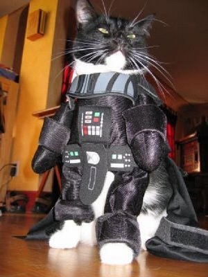On t'a reconnu sous ton masque Tigrou !! This is Cat Vader De la part d'Alice !!