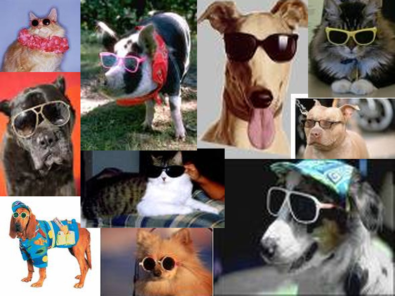 enjoy some low res, public domain photos of animals wearing sunglasses, on me
