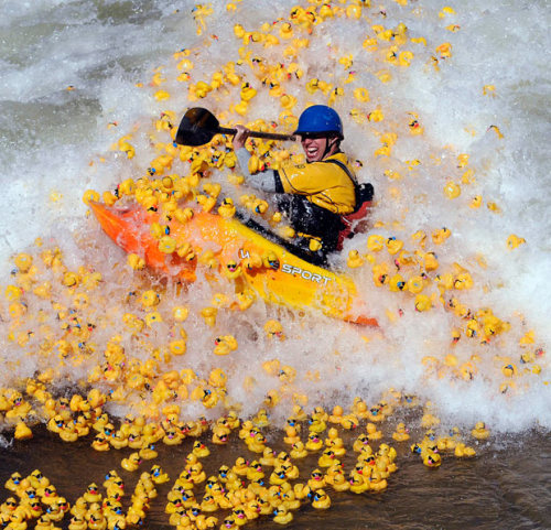 Wonder if this has anything to do with the Canoe Foundation rubber duck race at Lee Valley last weekend?