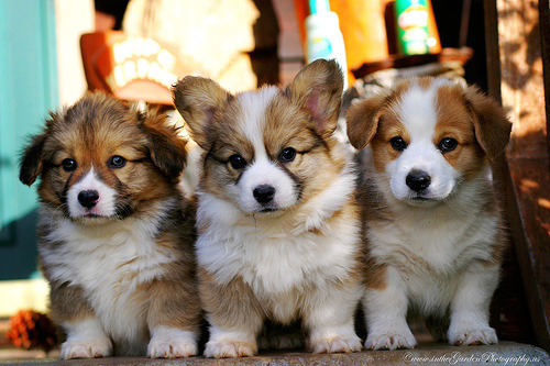One day little puppies, you will be mine.
