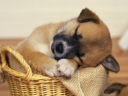 darylfranz:  Cute Overload - I always sleep in burlap sheets