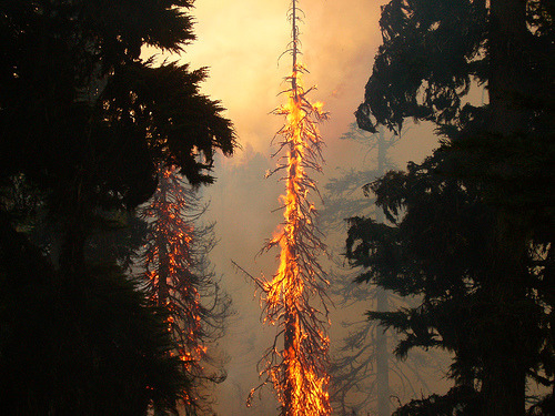 ruineshumaines:  Torching on the G.W. fire Sisters oregon (by mackleefire)
