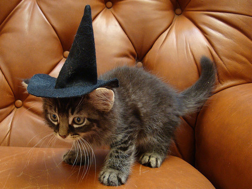 potterdream:  PROFESSOR MCGONAGALL!
