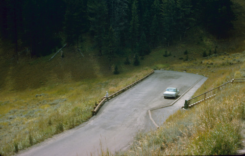 Yellowstone National Park  1965  Photo by Hugh Mason Ayer