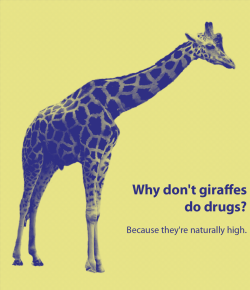 another giraffe joke :)