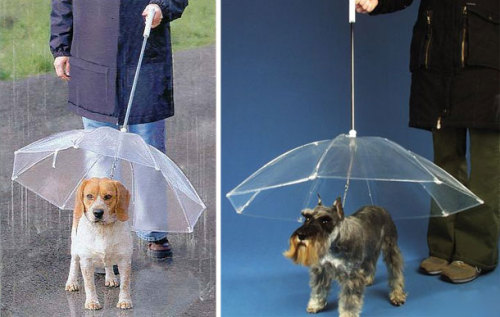 whitespaced:  Pet Umbrella.