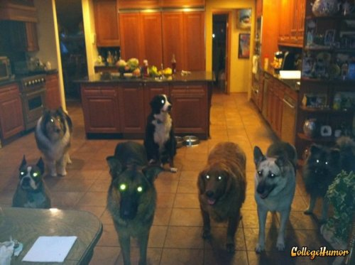 Demon Dogs Hang Out In Kitchen The last thing you see