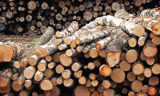 (Re)growing A Wood-Based Economy Could Slash Emissions | Fast Company Cutting down forests sounds like a bad way to reduce CO2, but new information shows that—if done right—making wood our primary building material (instead of steel or concrete) would be a boon for the environment.