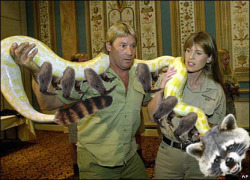 The Snakoon (RIP Steve Irwin)