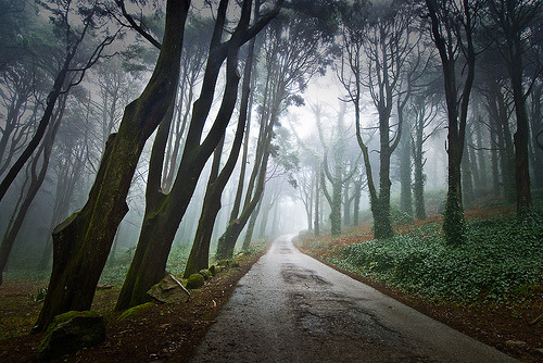 black-wolves:  Princesses, Peas and Enchanted Trees (by Luís Lx)