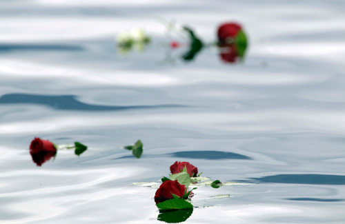 Roses cast by mourners float in the lake near the island of Utoya, Norway, on July 24, 2011. (AP Photo/Frank Augstein)  (via Tragedy in Norway ~The Atlantic)