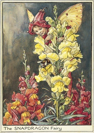 Garden Fairy : The Snapdragon Fairy by Mary Barker