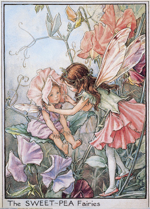 Garden Fairy : The Sweet-Pea Fairy by Mary Barker