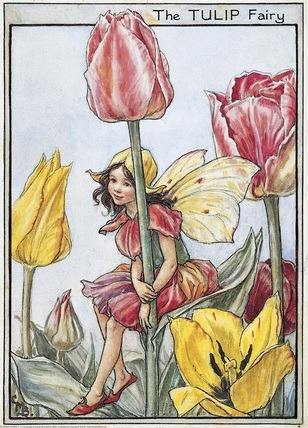 Garden Fairy : The Tulip Fairy by Mary Barker