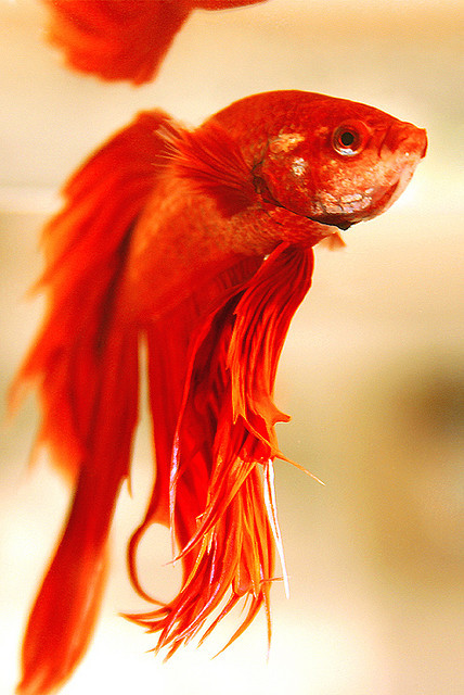 Loved my betta when I had one.