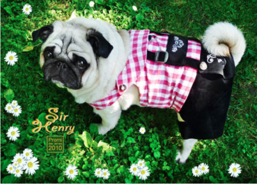 Pug in Lederhosen by Sir Henry [via wombatarma]