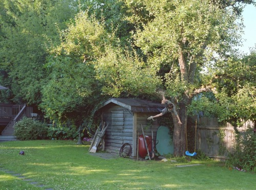 jennilee:  boy falling from tree- jeff wall (2010)