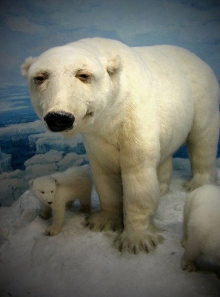 Depressed Polar Bear c/o the Terrible Taxidermy tumblr