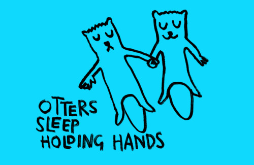 (via Otters sleep holding hands - Learn Something Every Day)