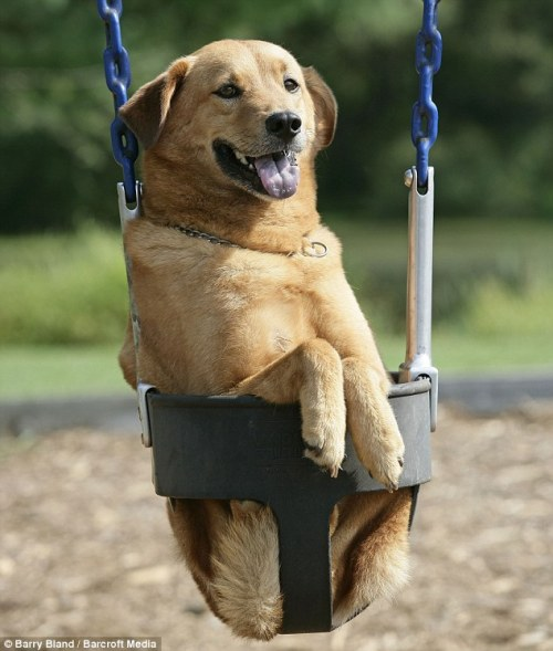 We can't get enough dogs on swings!