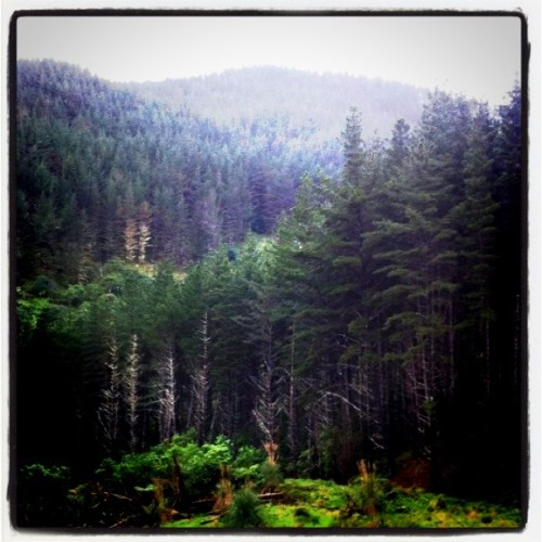 Forest in NZ (Taken with Instagram at New Zealand)