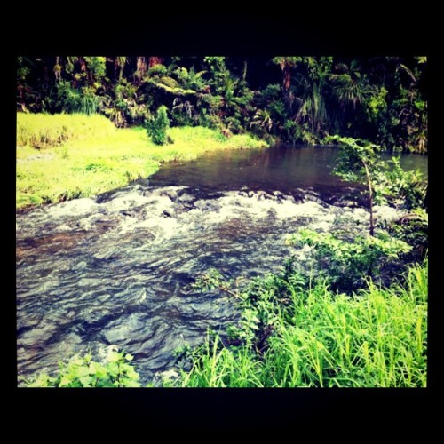 Crazy Jungles (Taken with Instagram at Waipoua Forest, New Zealand)