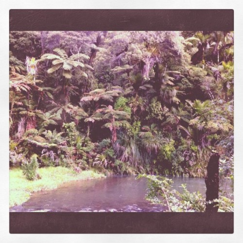 Waipoua Forest, New Zealand (Taken with Instagram at New Zealand)