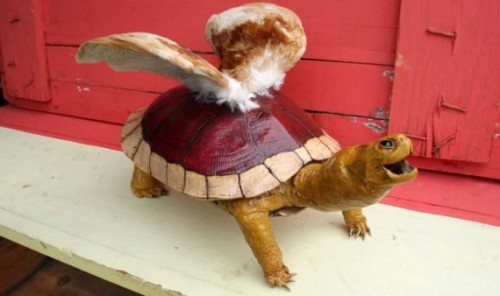 Never sleeping again: a taxidermy Koopa Paratroopa (via Geekosystem)