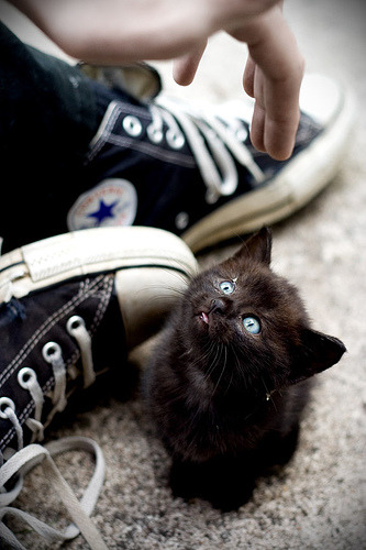 cupofcat:  .5517 (by welcome, ghosts)