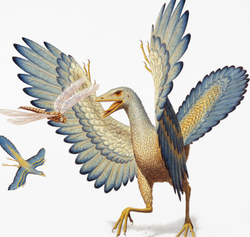 "14-billion-years-later:  the-green-chemist:  discoverynews:  The Oldest Bird Was Actually a Dinosaur  ""It's a stunning affirmation of evolution…and it's sort of fitting that Archaeopteryx, the emblem of evolution since Darwin's time, is still part of the story.""   I would also highly recommend to check out the following article: Earliest bird was not a bird? New fossil muddles the Archaeopteryx story - Not Exactly Rocket Science (Discover Blogs)    As far as I'm concerned birds still are dinosaurs.  I posted this little guy before when it was the topic of the day on one of my sons favorite shows, Dinosaur Train on PBS. I loved that he was learning about transitional species at 2 years old!"